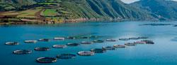 Encuesta sobre el comportamiento de peces escapados de piscifactorías y su percepción por los pescadores deportivos.